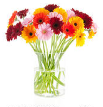 tanahoy.com fresh_flowers_in_vase