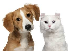 Cosmic Energy And Your Pets