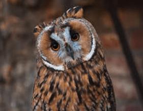 tanahoy.com owl