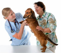 tanahoy.com pet_checkup