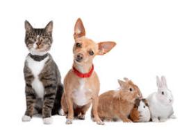tanahoy.com pets