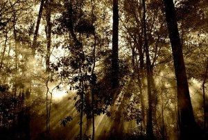 tanahoy.com forest1