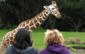 tanahoy.com zoo