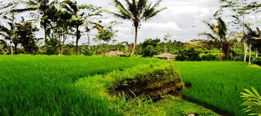 Jual tanah di ubud Tegalalang view sawah tebing dan sungai - TJUB038