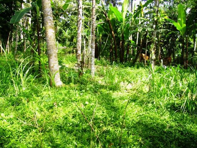 Tanah dijual di Ubud view sawah cocok Untuk villa  ( TJUB097 )