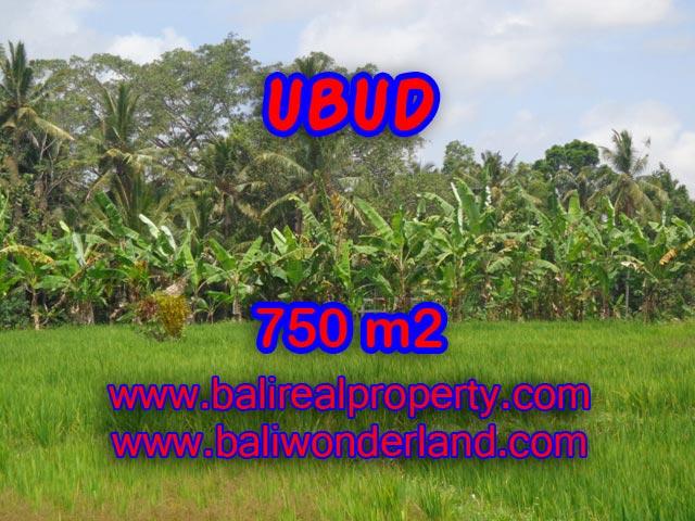 Tanah dijual di Ubud Bali 750 m2 sawah dan hutan di Dekat sentral Ubud