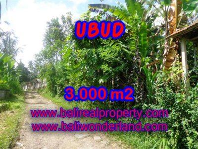 Tanah dijual di Ubud Bali 3.000 m2 view tebing di Ubud Payangan