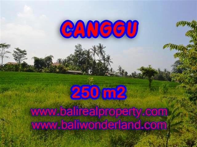 TANAH DI BALI DIJUAL MURAH DI CANGGU CUMA RP 2.750.000 / M2 - INVESTASI PROPERTY DI BALI
