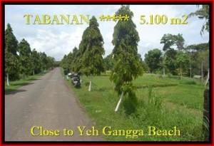 JUAL TANAH di TABANAN BALI 51 Are View kebun dan sungai