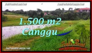TANAH DIJUAL MURAH di CANGGU 15 Are di Canggu Batu Bolong