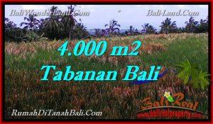 TANAH MURAH di TABANAN BALI 4,000 m2 di Tabanan Selemadeg