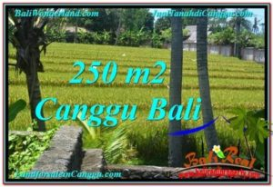 TANAH MURAH di CANGGU BALI 2.5 Are View sawah lingkungan villa