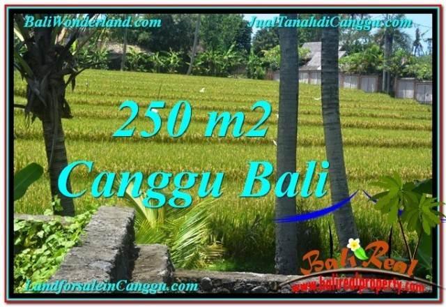 JUAL TANAH di CANGGU BALI 2.5 Are View sawah lingkungan villa