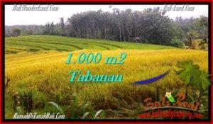 JUAL MURAH TANAH di TABANAN BALI 10 Are View sawah dan laut