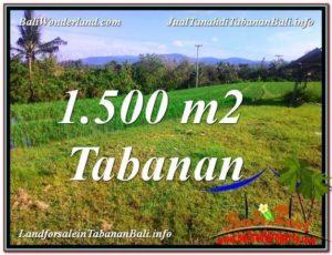 JUAL TANAH di TABANAN BALI 1,500 m2 di Tabanan Selemadeg