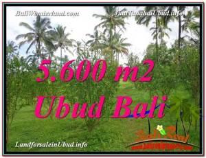 DIJUAL TANAH di UBUD 5,600 m2 di Ubud Tegalalang