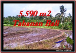 TANAH di TABANAN BALI DIJUAL MURAH TJTB257