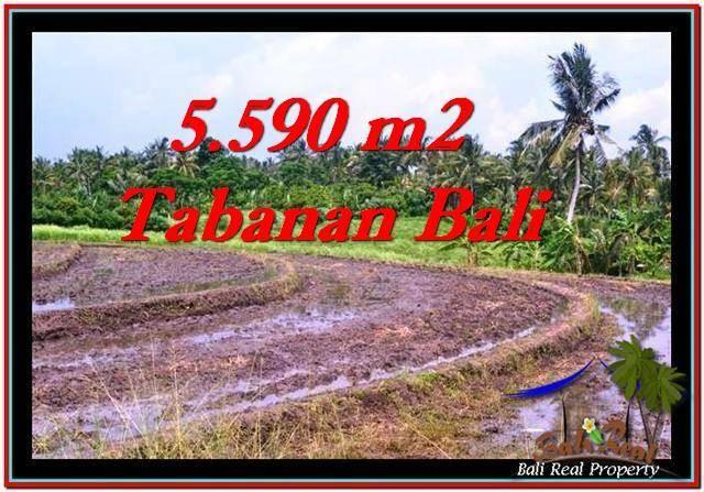 TANAH MURAH JUAL di TABANAN BALI 5,590 m2  View sawah dan laut