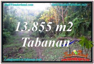 JUAL MURAH TANAH di TABANAN BALI 138.55 Are View Kebun dan Sungai