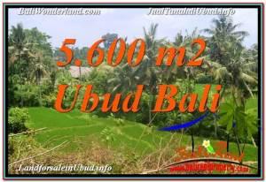 TANAH di UBUD DIJUAL 5,600 m2 di Sentral / Ubud Center