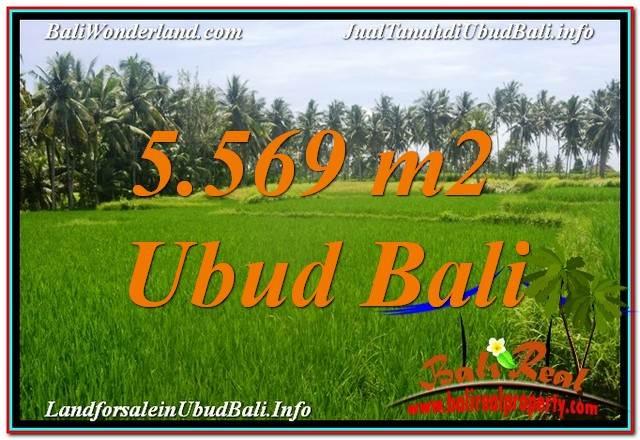 TANAH JUAL MURAH  UBUD 5,569 m2  View Sawah dan Sungai Kecil