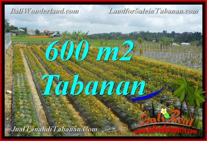 TANAH MURAH DIJUAL di TABANAN BALI 600 m2 di Tabanan Bedugul