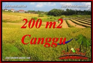 TANAH di CANGGU JUAL 200 m2 VIEW SAWAH, LINGKUNGAN VILLA