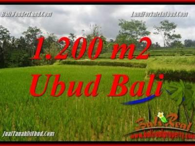 JUAL Murah Tanah di Ubud Bali 12 Are View sawah, lingkungan Villa