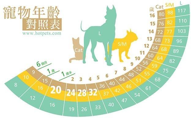 毛孩相當人類幾歲?狗貓年紀對照表   臺灣動物新聞網