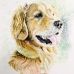 close up of Golden Retriever with green collar and tongue out