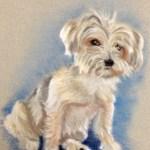 Shih Tzu seated dog portrait