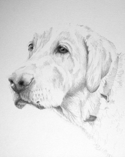 pencil sketch of white lab
