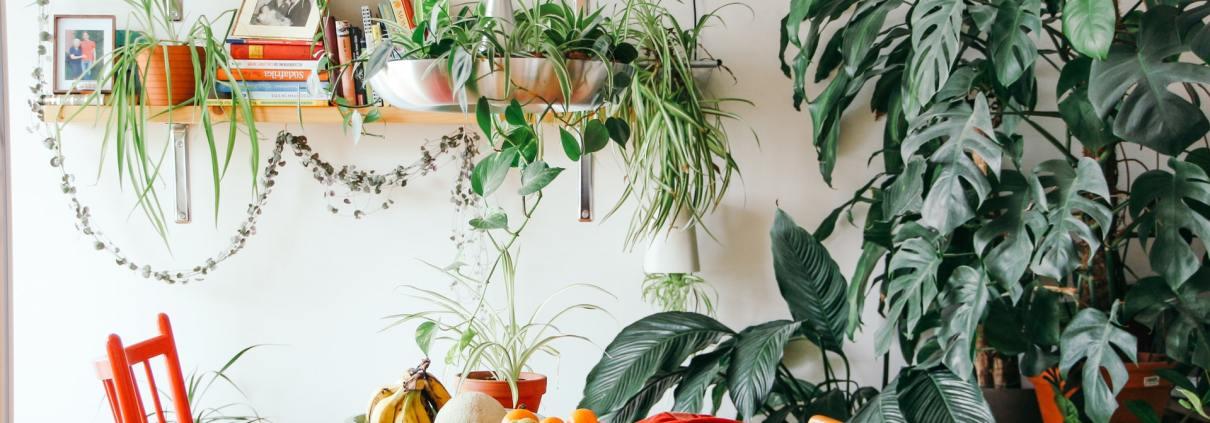 Fotografia d'un menjador ple de plantes