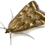 How To Control Prevent Moth Infestations In Your House