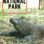 komodo-national-park-indonesia-pinterest2