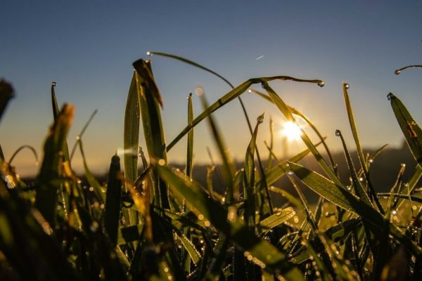 Gras im Gegenlicht des Sonnenaufgangs fotografiert
