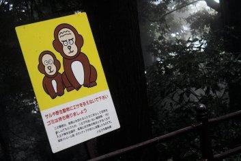 Malheureusement, nous n'avons pas vu de singes sauvages