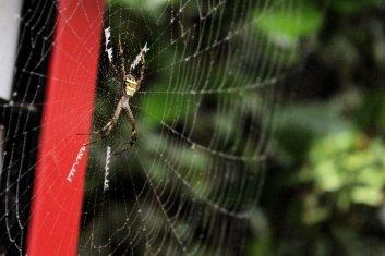 Je pense que cette araignée aurait pu me tuer
