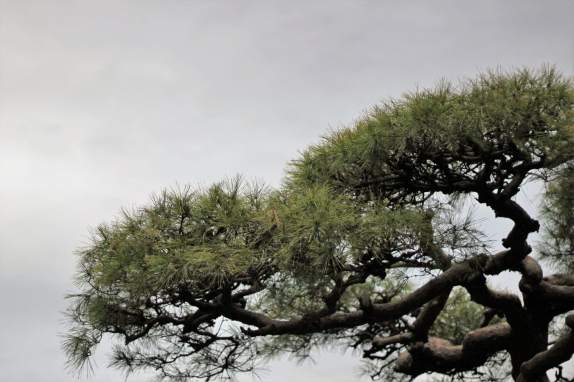 cimetiere-daoyama-7