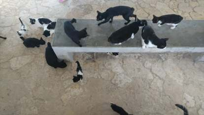 les-chats-de-kondoi-beach-1