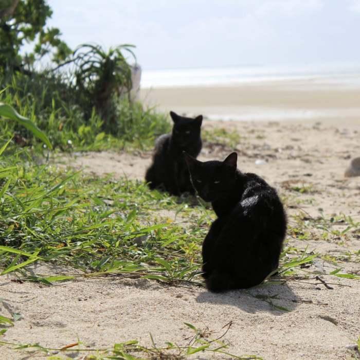 Le gang des chats de Kandoi Beach - Taketomi Jima