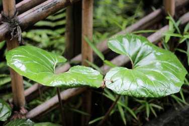 Ichigayakameokahachimangu (16)