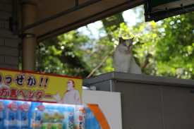 Kagoshima Matsuri 15 juillet (5)