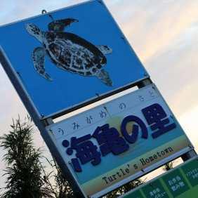 Yakushima 11 juillet 2017 (11)