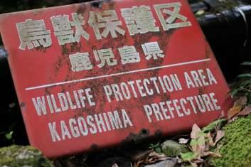 Yakushima Randonnée 13 juillet 2017 (1)