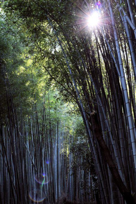 2017-10-27 Arashiyama Kyoto (9)
