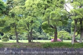 Hamarikiyu Gardens Tokyo (13)