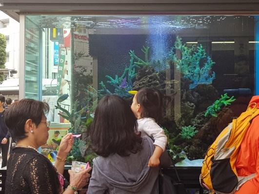 Aquariums à l'entrée