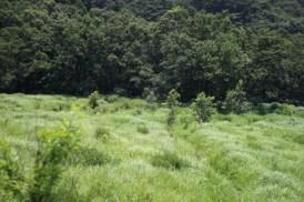 Herbes grasses de Kyushu