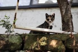 Kurokawa Onsen Cats 21 juillet 2017 (5)